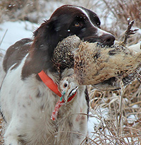 Ani is one awesome hunting dog